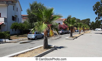 Street town with palm trees in middle of road
