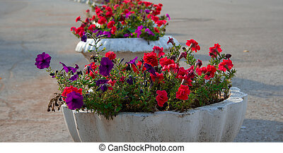 Street vases with the flowers
