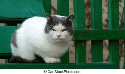 street white sulphur cat sitting on a bench in outside cold autumn