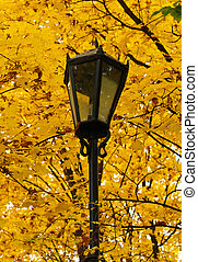 streetlight in the autumn park