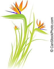 (strelitzia), flor, pássaro, paraisos