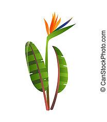 strelitzia, flower., バックグラウンド。, パラダイス, 白い花, 鳥
