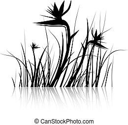 (strelitzia), kwiat, ptak, raj