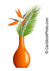 Strelitzia reginae in vase - Strelitzia reginae, bird of...