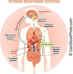 Stress response system vector illustration diagram, nerve ...