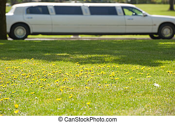 stretch limo behind a patch of daisies - field of daisies...
