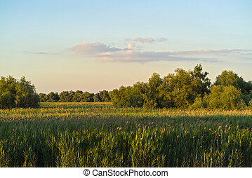 Stretch of reed field in the Danube Delta
