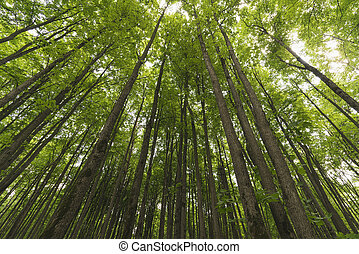 Stretching up the trunks of trees in the forest.