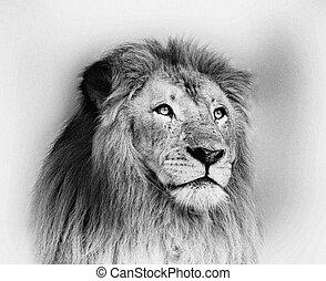 Striking Black and White Lion Face Portrait