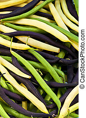 String beans - Pile of purple yellow and green string beans