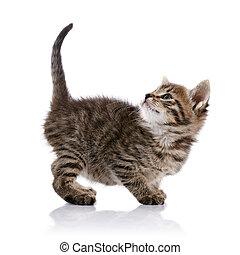 Striped amusing small kitten.
