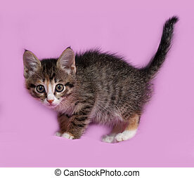 Striped and red kitten standing on pink
