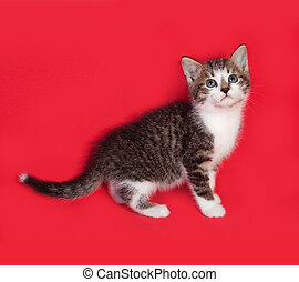 Striped and white kitten standing on red