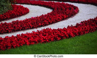 striped bed of red flowers.