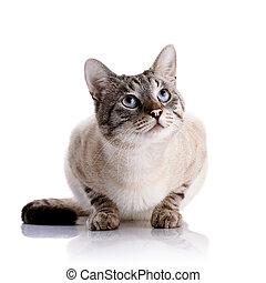 Portrait of a striped blue-eyed cat. Striped cat. Striped not purebred kitten. Small predator. Small cat.