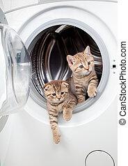 striped british kittens inside laundry washer
