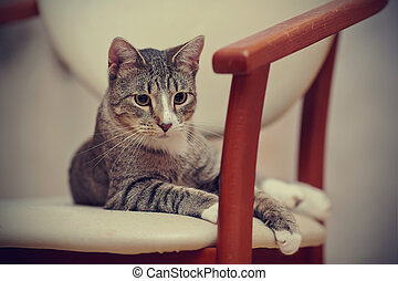 Striped cat on a chair.