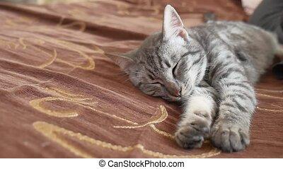 striped cat sleeps striped. Cute Cat sleeping on side -...