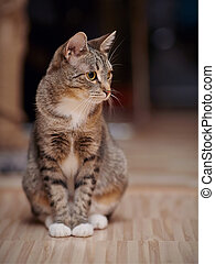 Striped cat with white paws and yellow eyes