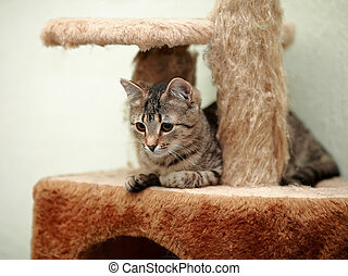 Striped domestic cat. Striped not purebred kitten. Small...