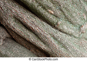 Striped embossed texture of the brown wooden bark. Green lichened surface of a tree, soft focus, close-up