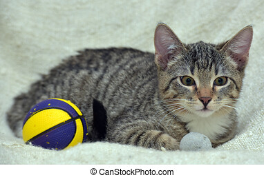 striped kitten and ball toy next