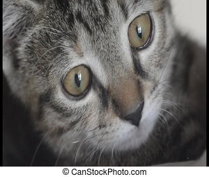 Close up of cute kitten looking around