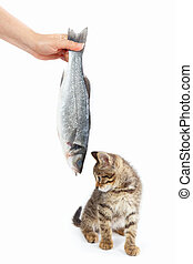 Striped kitten looking at labrax fish which gives it a...