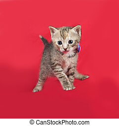 Striped kitten standing on red