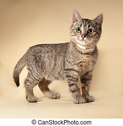 Striped kitten standing on yellow