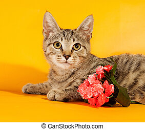 Striped kitten with bouquet of flowers lying on yellow