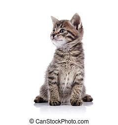 Striped lovely small kitten.