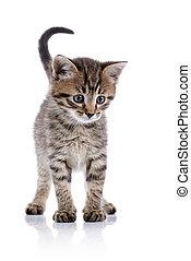 Striped small kitten.