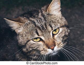 stripes brown cute cat portrait