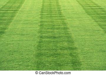 strisce, erba
