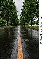 striscia gialla, di, bagnato, albero ha rivestito strada