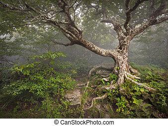 strisciante, fairytale, albero, sinistro, foresta, nebbia,...