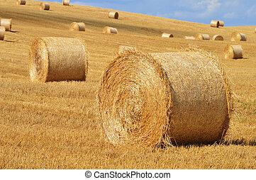 stro, velden, koren, na, balen, oogsten