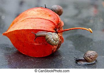 Strolling snails