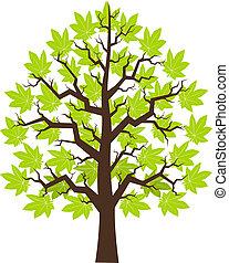 strom, javor, s, nezkušený, leafage