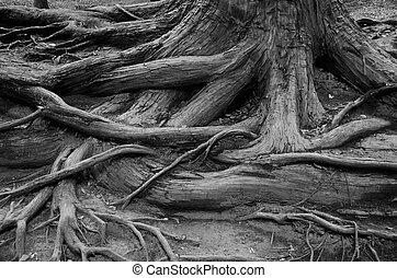 strom, kořeny