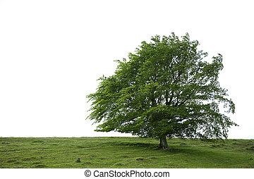 strom, kráska