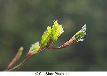 strom, nastávající, pramen, list