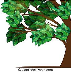 strom, s, mladický list