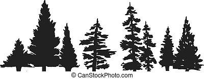 strom, silueta, borovice
