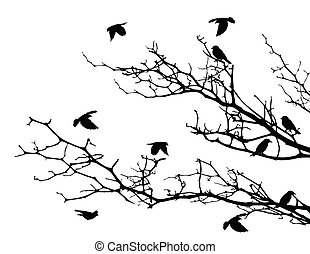 strom, silueta, ptáci