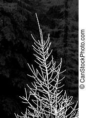 strom, sněžit