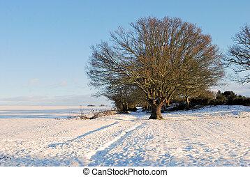 strom, sněžit, zima