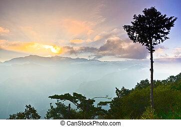 strom, východ slunce, hora, ali, sad, taiwan, alishan, hora...