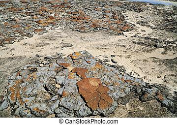 Stromatolites at Hamelin Polls
